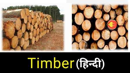 What is Timber in civil engineering hindi